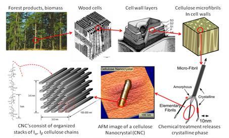 nanokristalyos-celuloz-eloallitasa